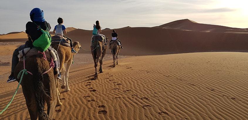 1001 tours Morocco opiniones de clientes imagen camellos